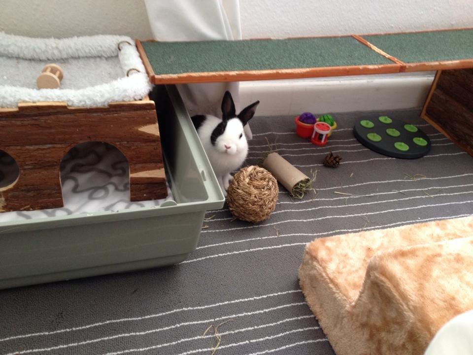 hjemmelavet kanin legetøj