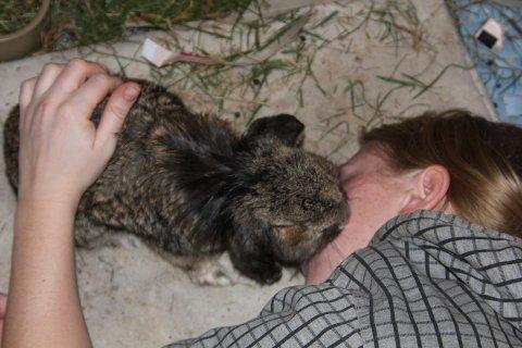 kaniner som kaeledyr neutralisering af kaniner kraeft hos kaniner