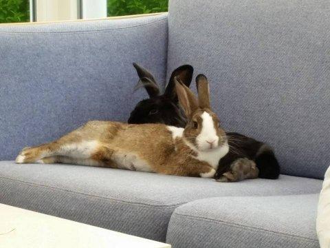 sjove kaniner