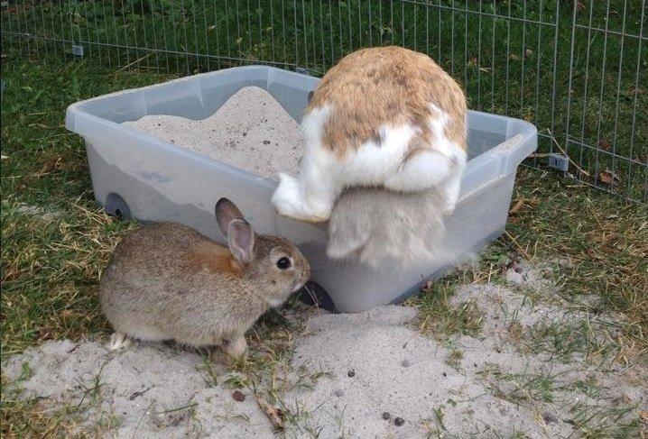 hvordan sover kaniner