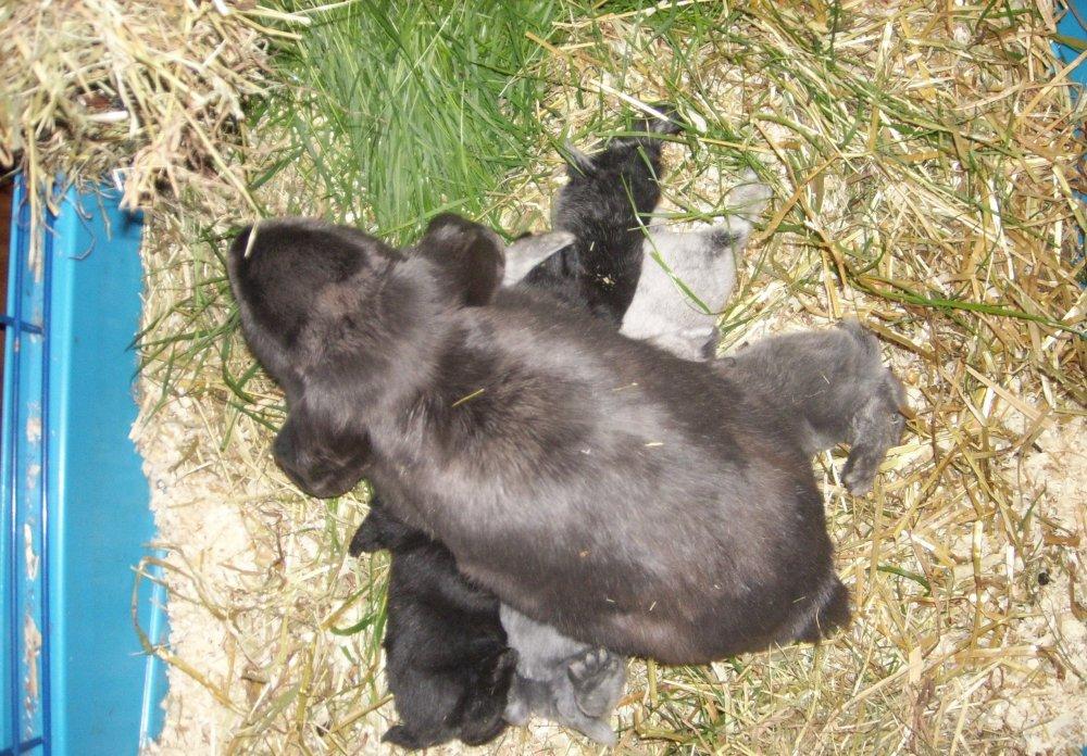 hvornår må kaninunger tages fra moderen