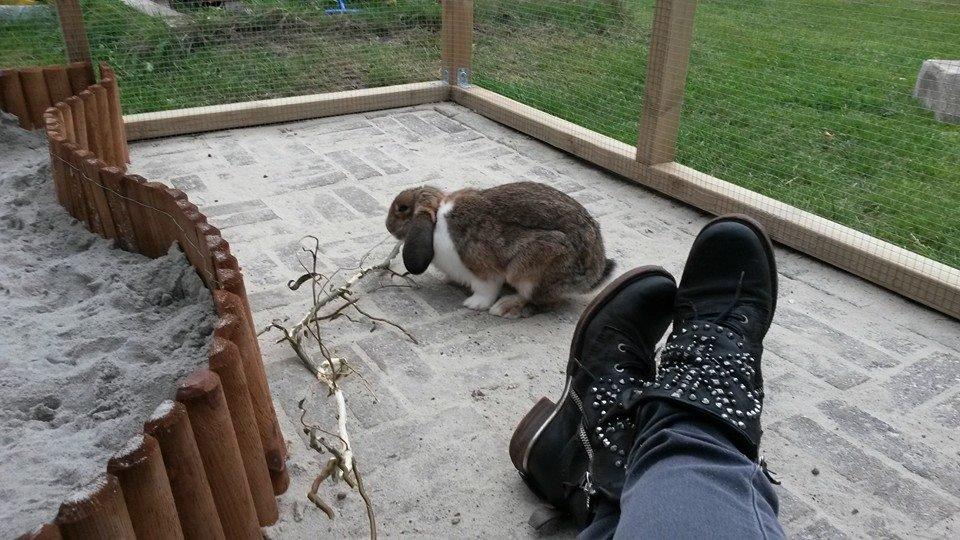 kaninbur udendørs byg selv